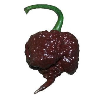 chili_seeds_-_carolina_reaper_chocolate